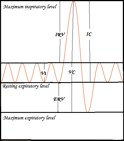 A Stepwise Approach to the Interpretation of Pulmonary Function Tests